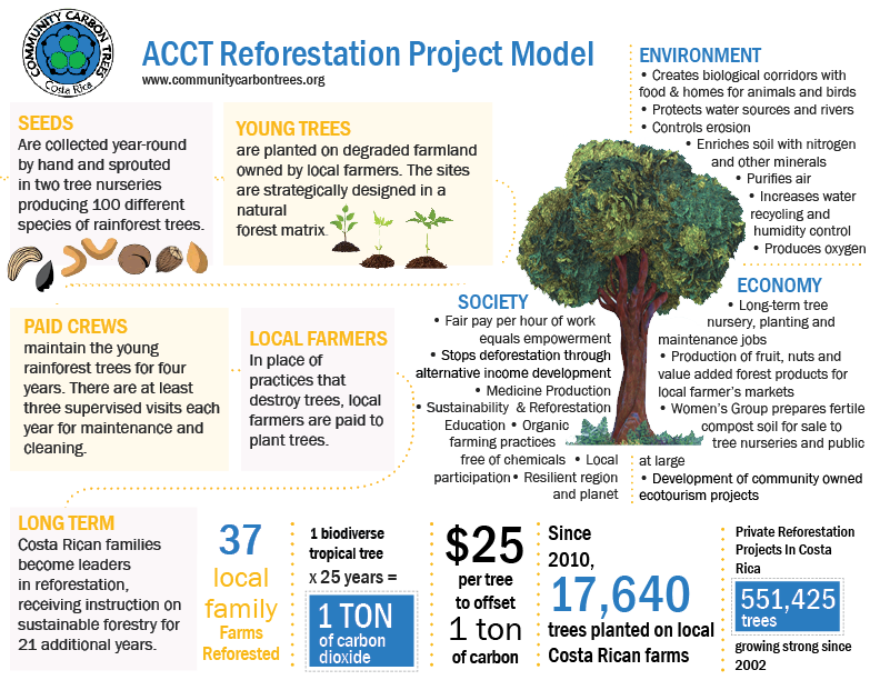 Reforestation Project Infographic