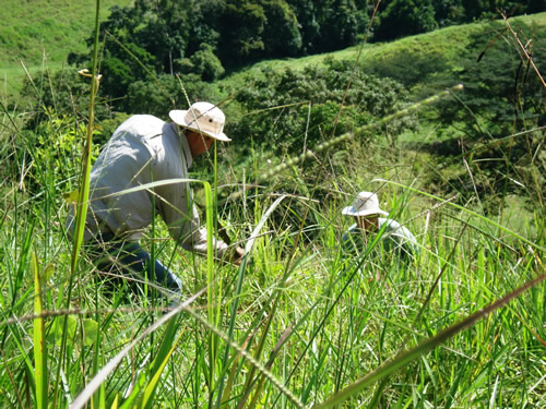 workers prepare land for reforestation